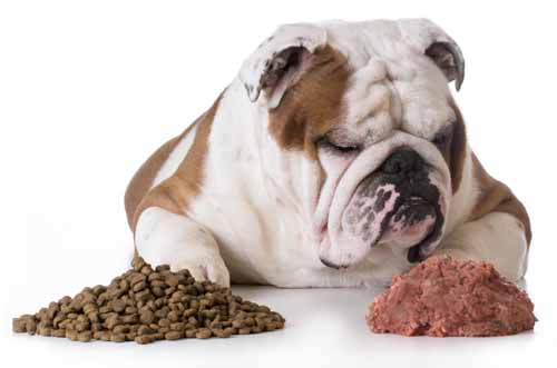 Can Dogs Eat Hamburger Meat? | Perfect